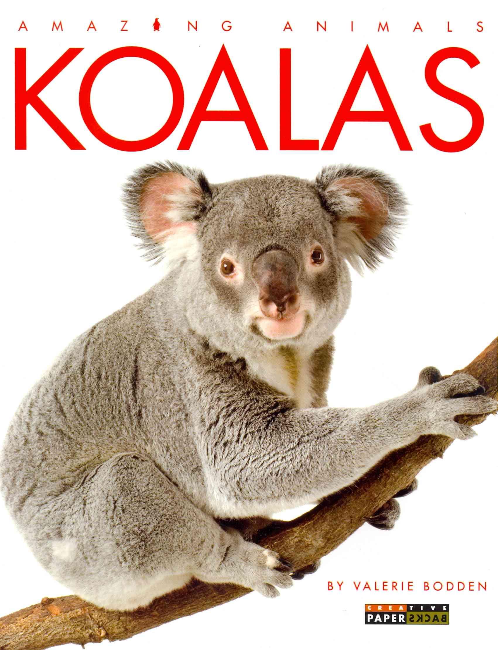 Koalas By Bodden, Valerie